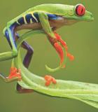 Calendriers Insectes, reptiles, grenouilles